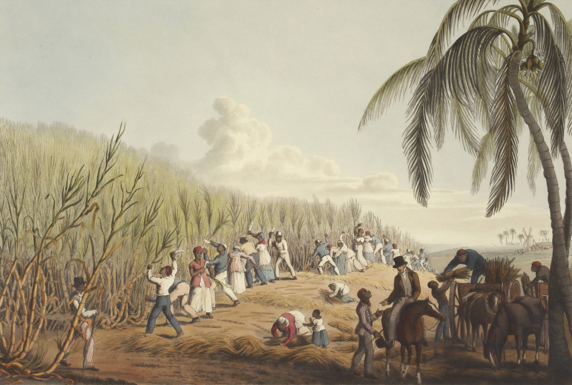 Painting of a plantation with black people reaping the harvest