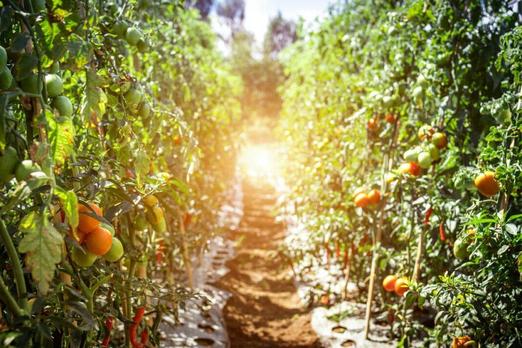 farmer local produce plant