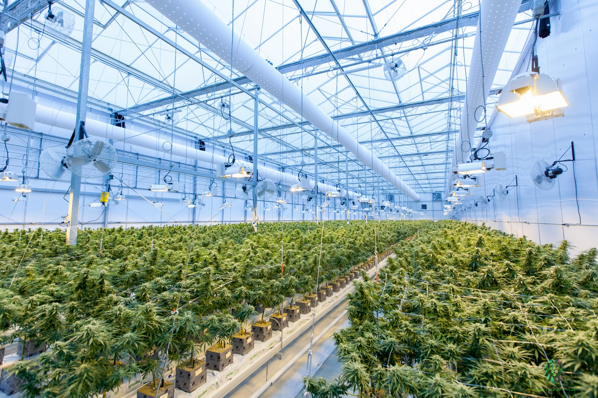 cannabis facility